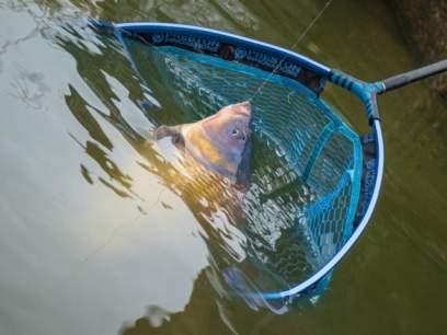 Cap minciog Preston Latex Carp Landing Net 22