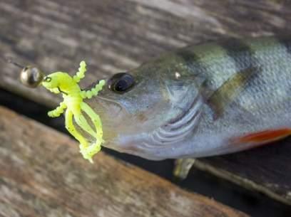 Crazy Fish Crayfish 7.5cm 54 Squid