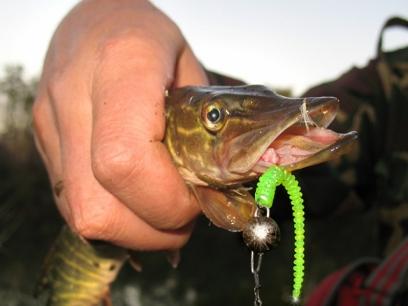 Crazy Fish Cruel Leech 5.5cm 1 Squid