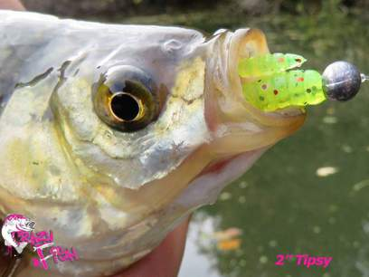 Crazy Fish Tipsy 3cm 1/9 Squid