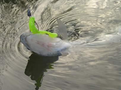 Shad Bass Assassin Turbo Shad 15cm Chartreuse Silver Glitter