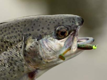 Shad Crazy Fish Nano Minnow 4cm 9 Squid