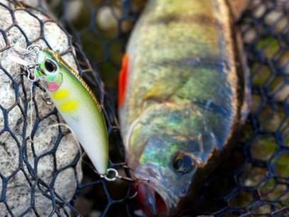 Vobler DUO Ryuki 50SP Himemasu 5cm 3.3g ACCZ139 Mat Pink Red Head SP
