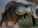 Crazy Fish Cruel Leech 5.5cm 49 Shrimp