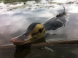 Vobler Savage Gear Suicide Duck 10.5cm 28g 03 F